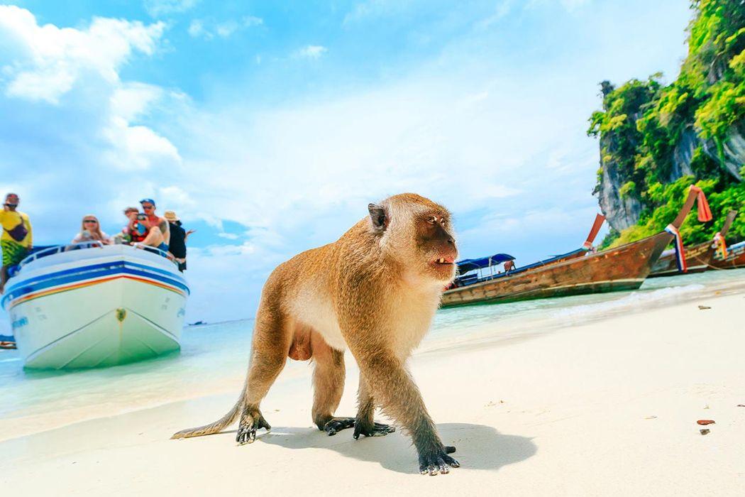 Đi chơi ở bãi biển Monkey