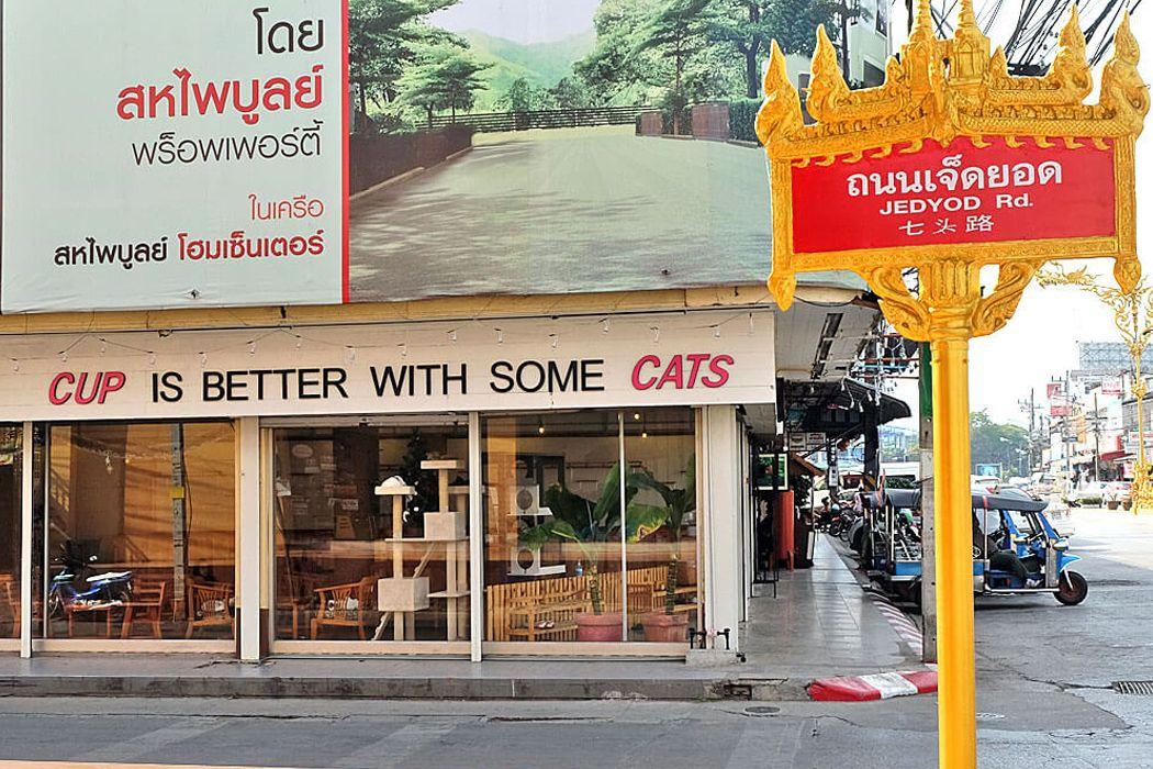 Cat 'n' A Cup Cat Cafe