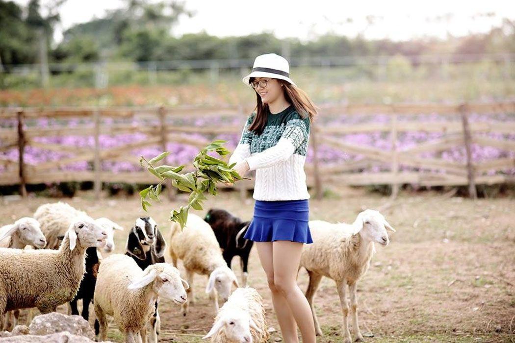 Vui đùa bên những chú cừu, chú ngựa dễ thương