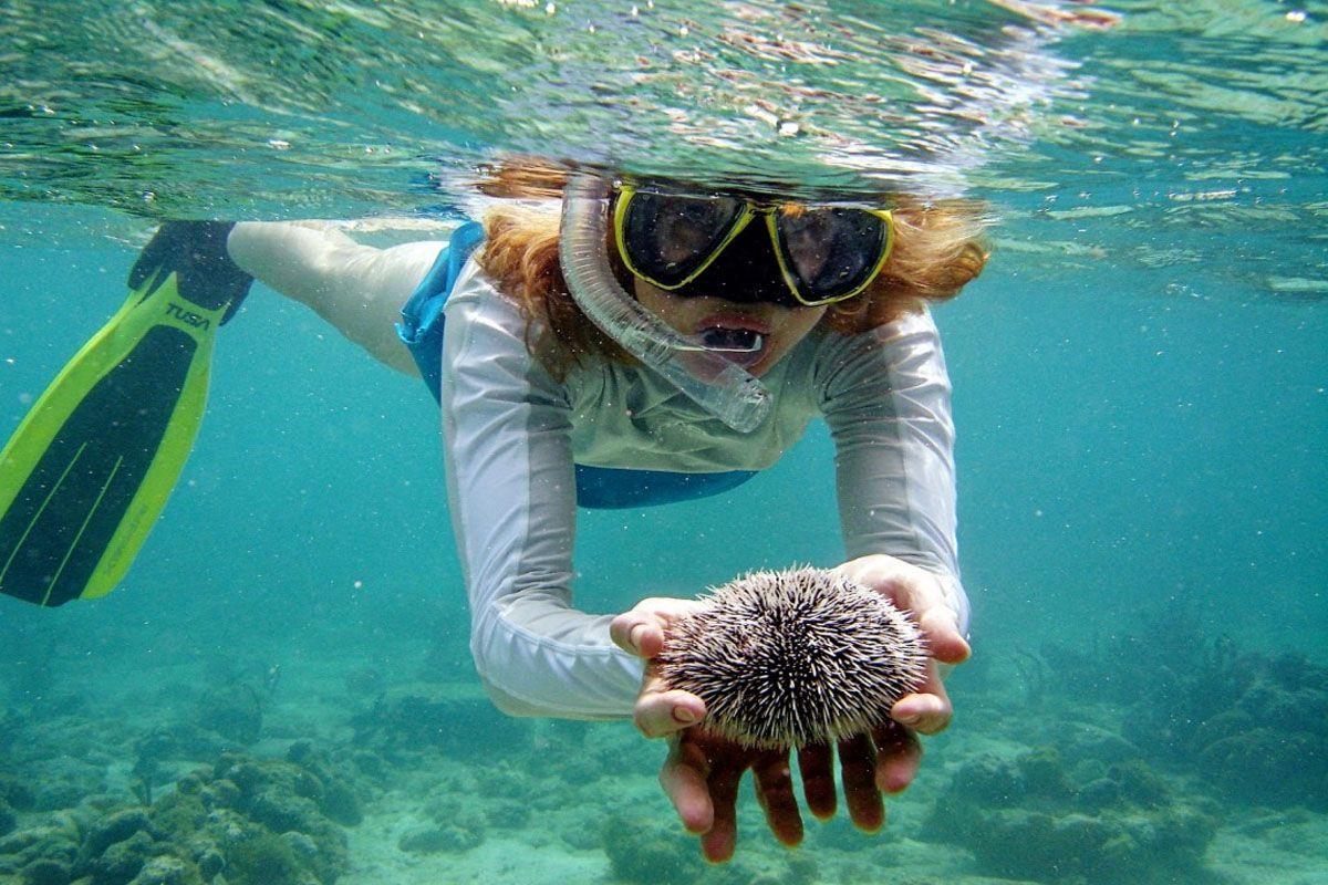 Lặn biển ở Koh Phi Phi