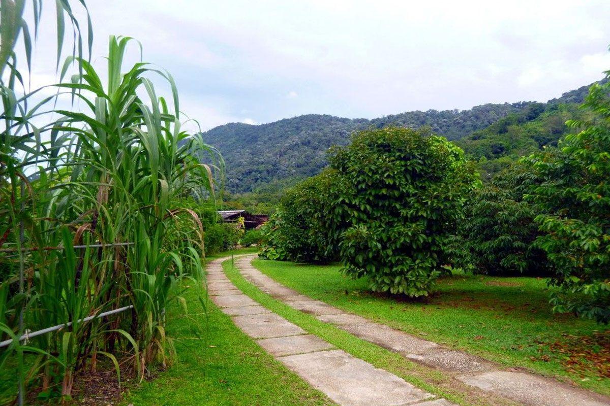 Trang trại trái cây nhiệt đới