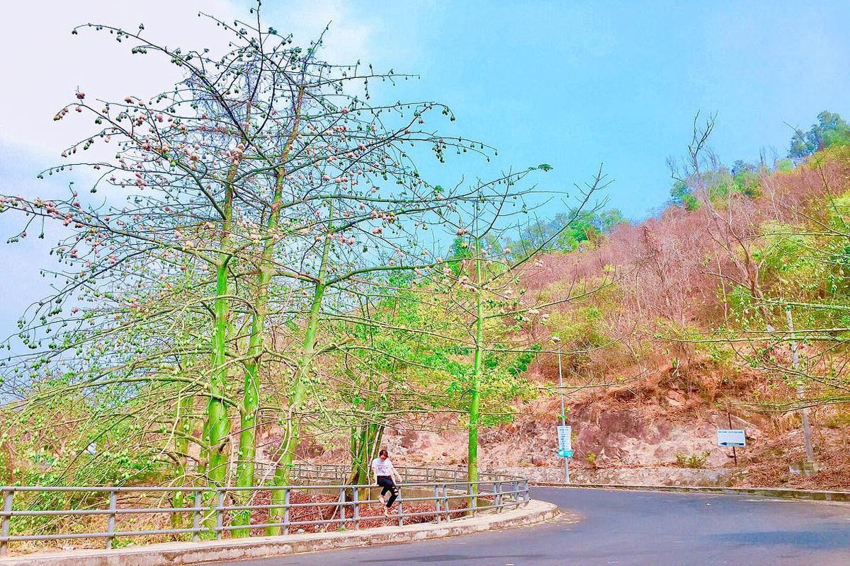 Con đường cây bông gòn Vũng Tàu