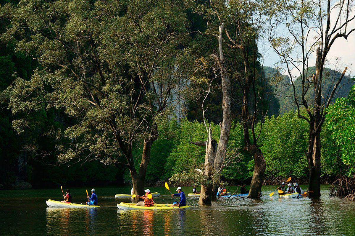 Đi thuyền kayak trong rừng ngập mặn