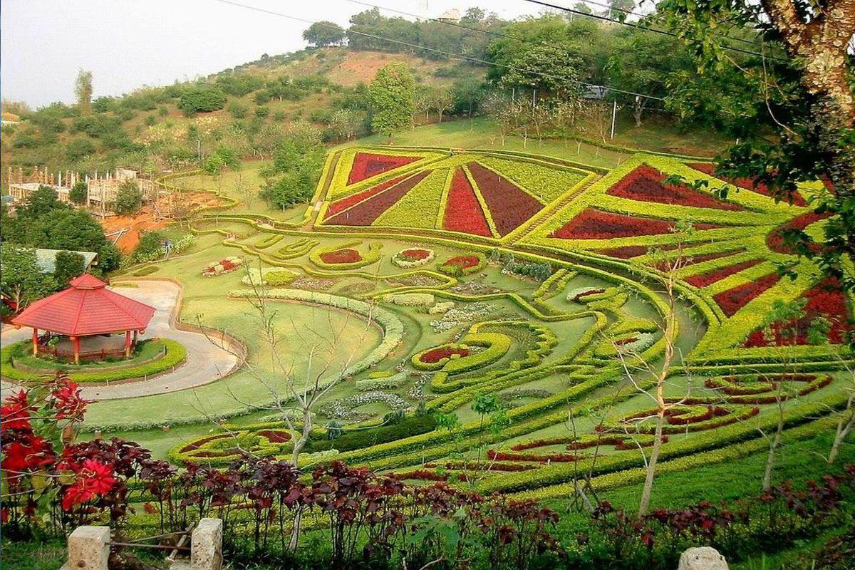 Doi Mae Salong - ngọn đồi hoa anh đào