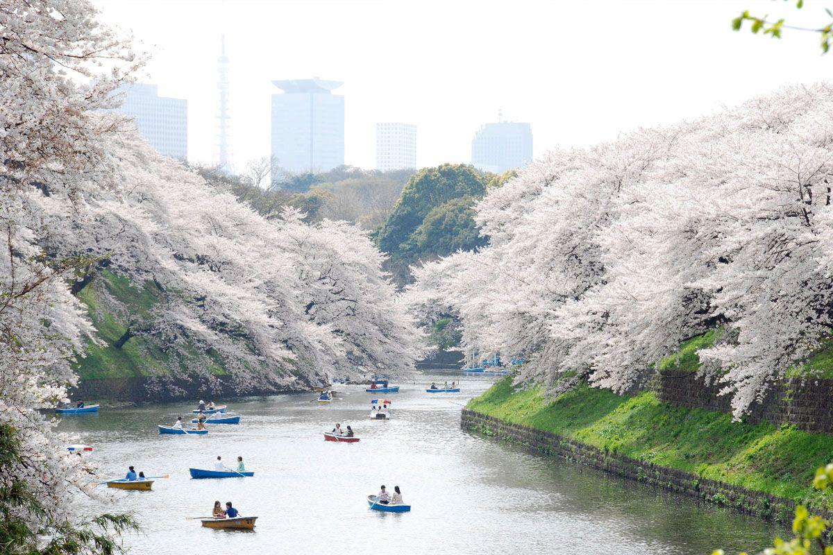 Đi dạo qua công viên Ueno