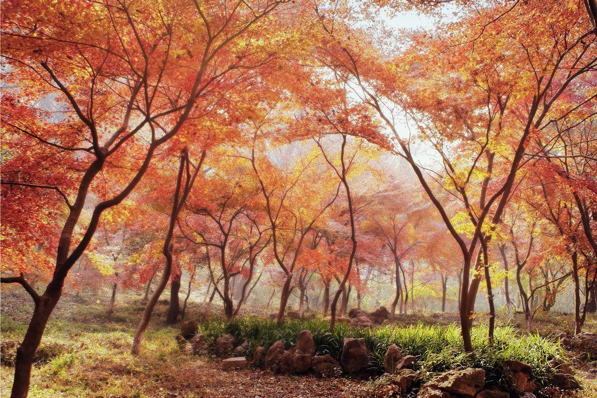 Mùa thu (từ tháng 9 đến tháng 11)