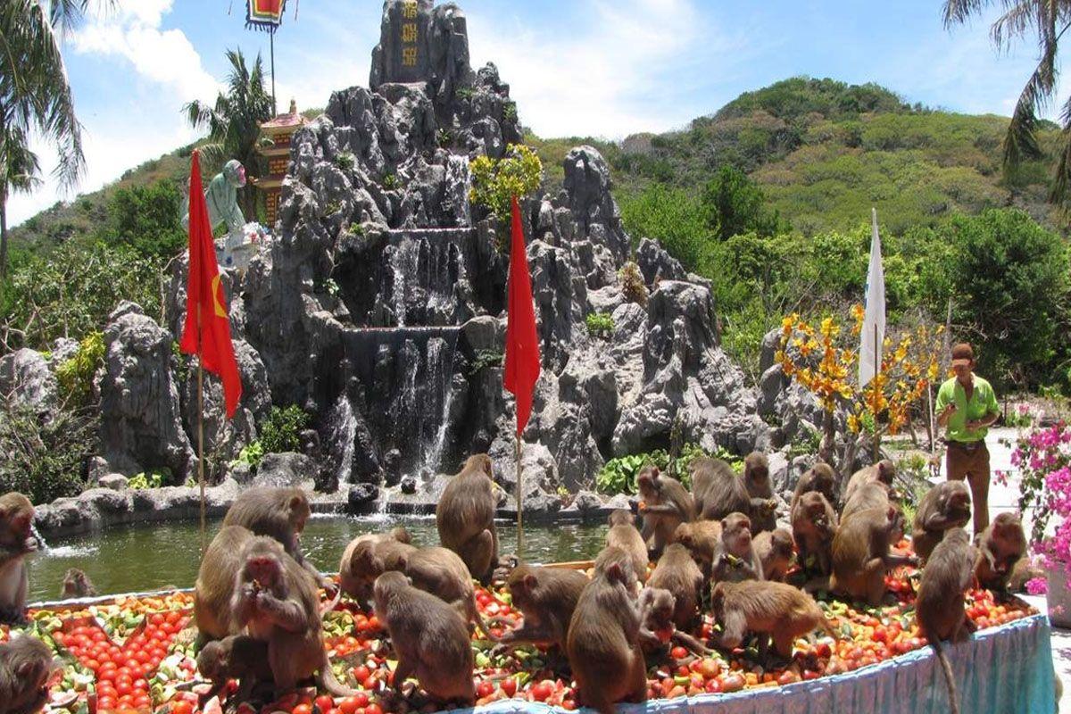 Khám phá đảo khỉ