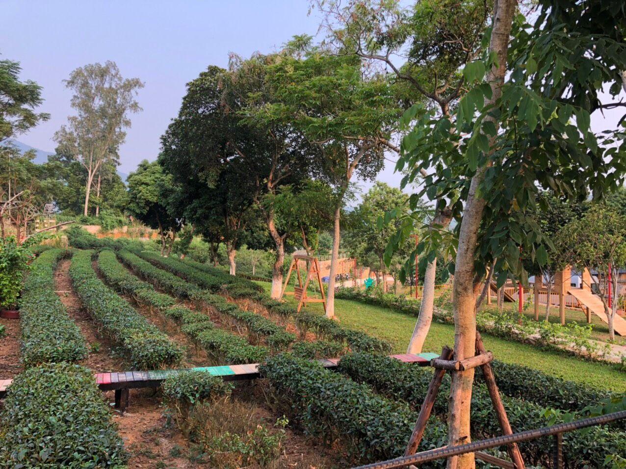 khong-gian-camellia-homestay-ba-vi-ha-noi-07