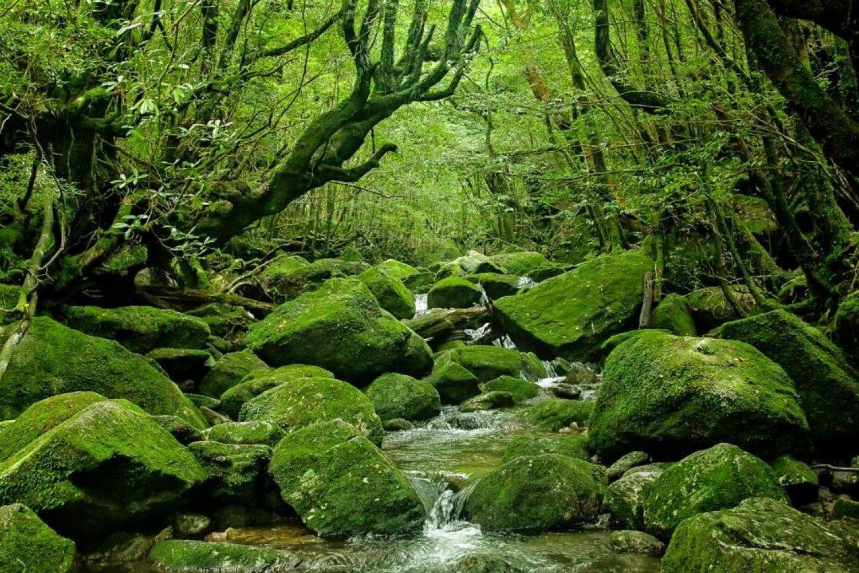 Đảo Yakushima (Kagoshima)