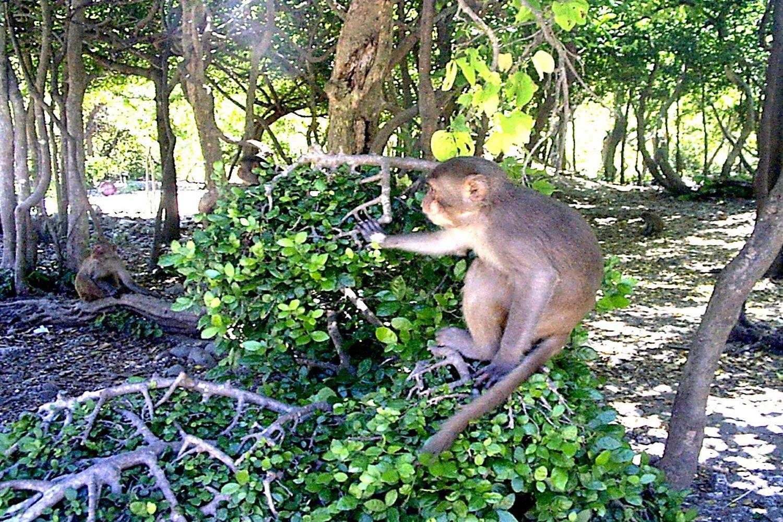 Nhiều động vật trên Vườn quốc gia Cát Bà