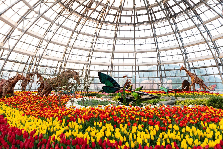 The World Garden