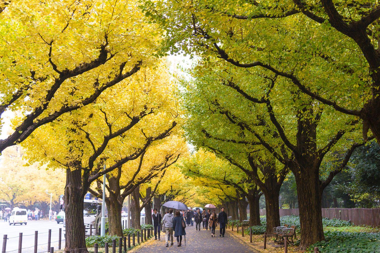 Đại lộ Icho Namiki