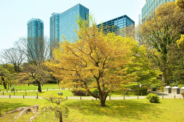 Vườn Hama Rikyu