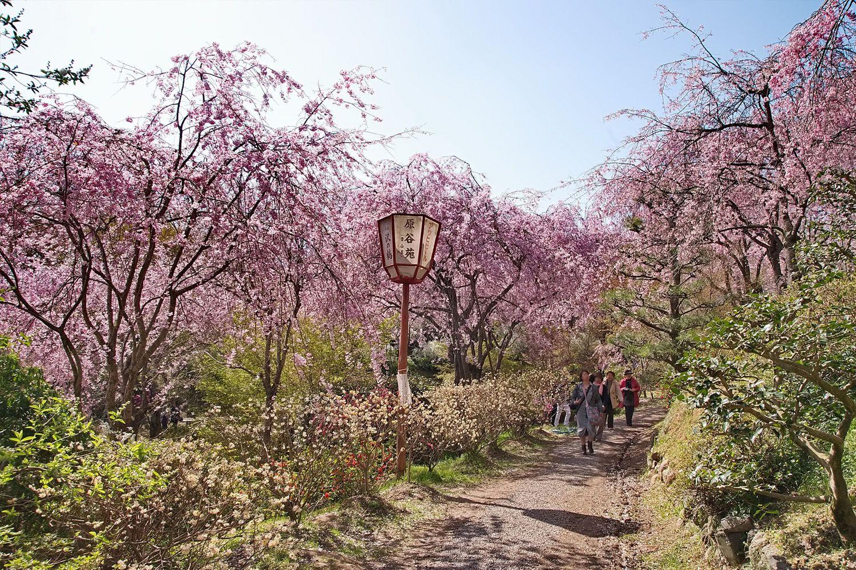 Vườn Haradani-en