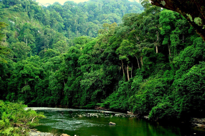 Khu bảo tồn thiên nhiên thuộc thung lũng Danum