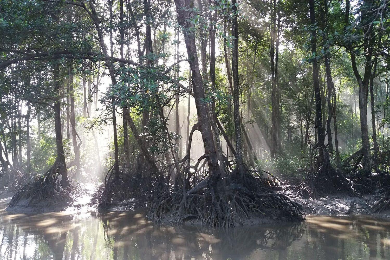Khu bảo tồn rừng ngập mặn Matang