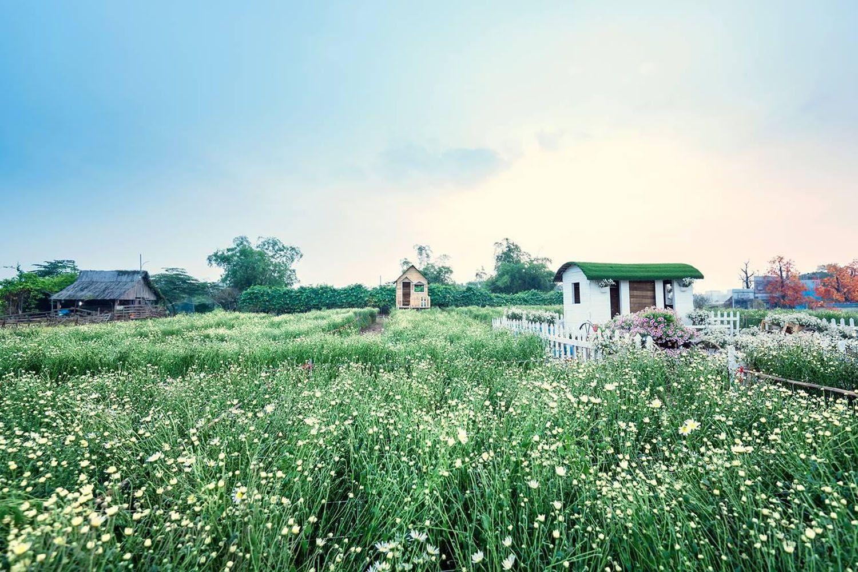 Thảo nguyên hoa Long Biên