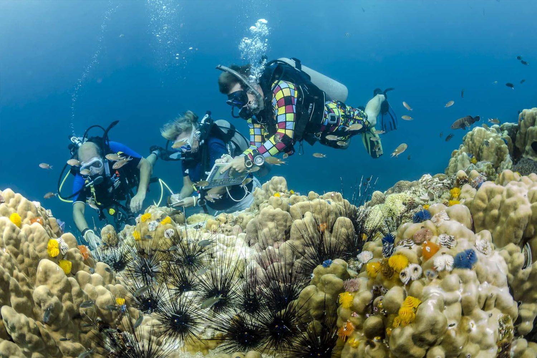 Lặn ngắm hệ sinh thái biển