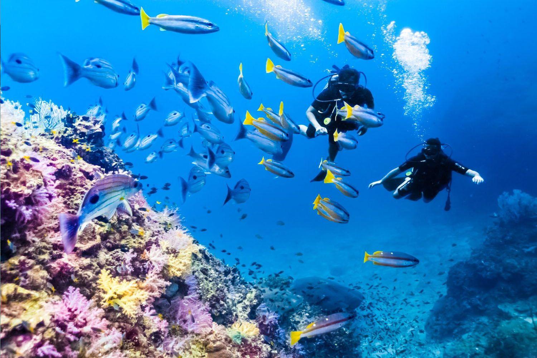 Lặn biển ngắm san hô và các sinh vật biển