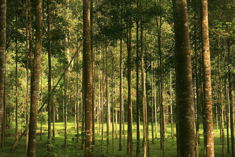 Viện nghiên cứu rừng Malaysia