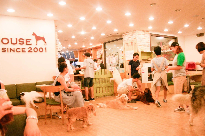 Thưởng thức cà phê trong các quán cà phê thú cưng