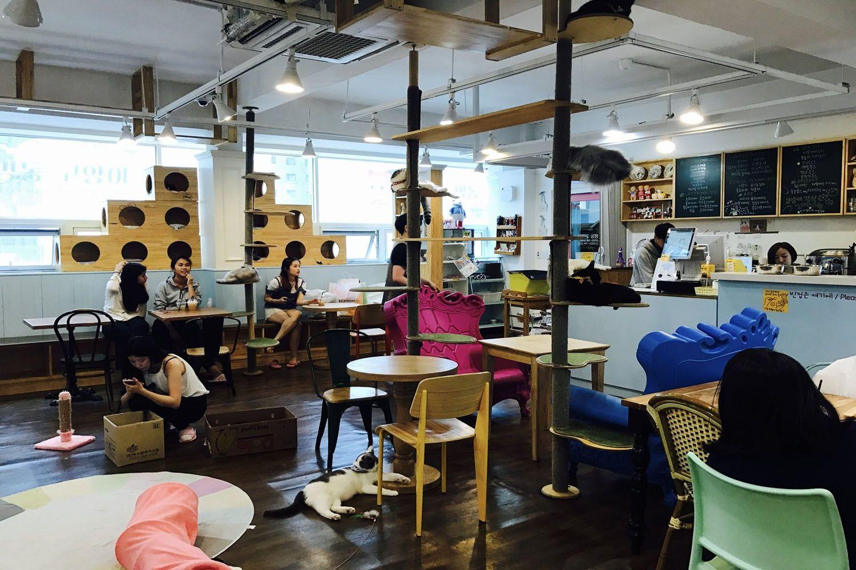 Cat Cafe MyeongDong