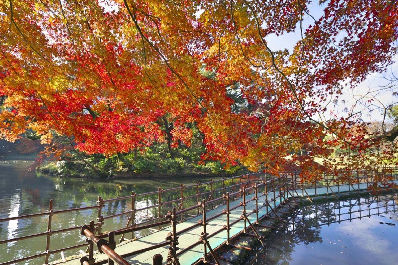 Vườn Koishikawa Koraku