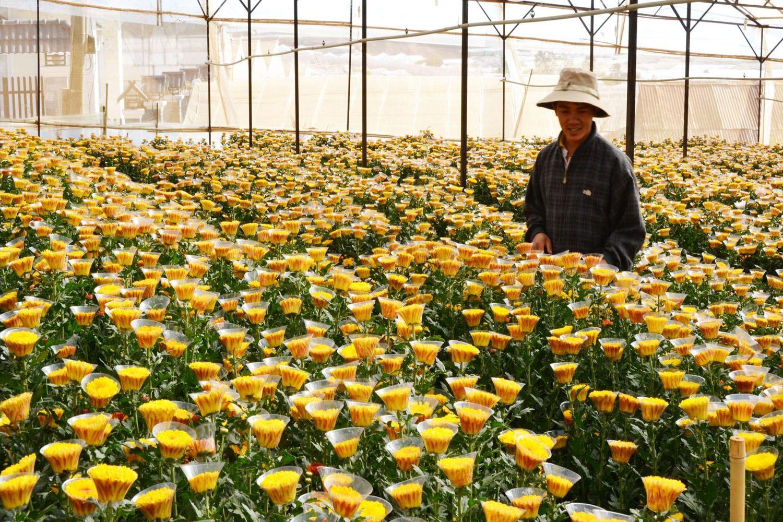 Vẻ đẹp độc đáo của làng hoa Thái Phiên Đà Lạt