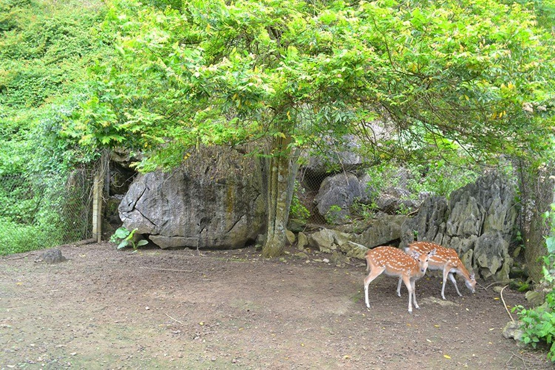 Khu sinh thái Vườn quốc gia Cát Bà