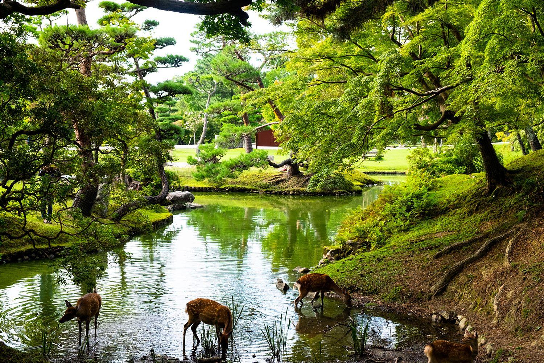 Thành phố Nara