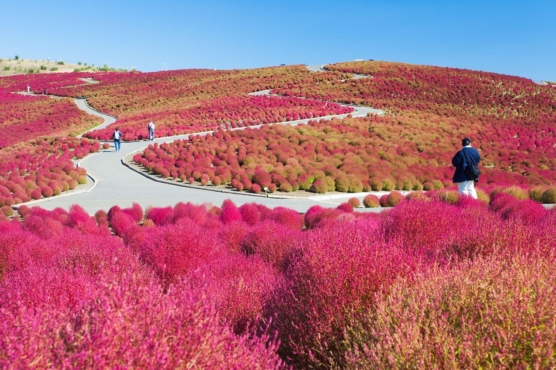 Công viên Bờ biển Hitachi – Ibaraki