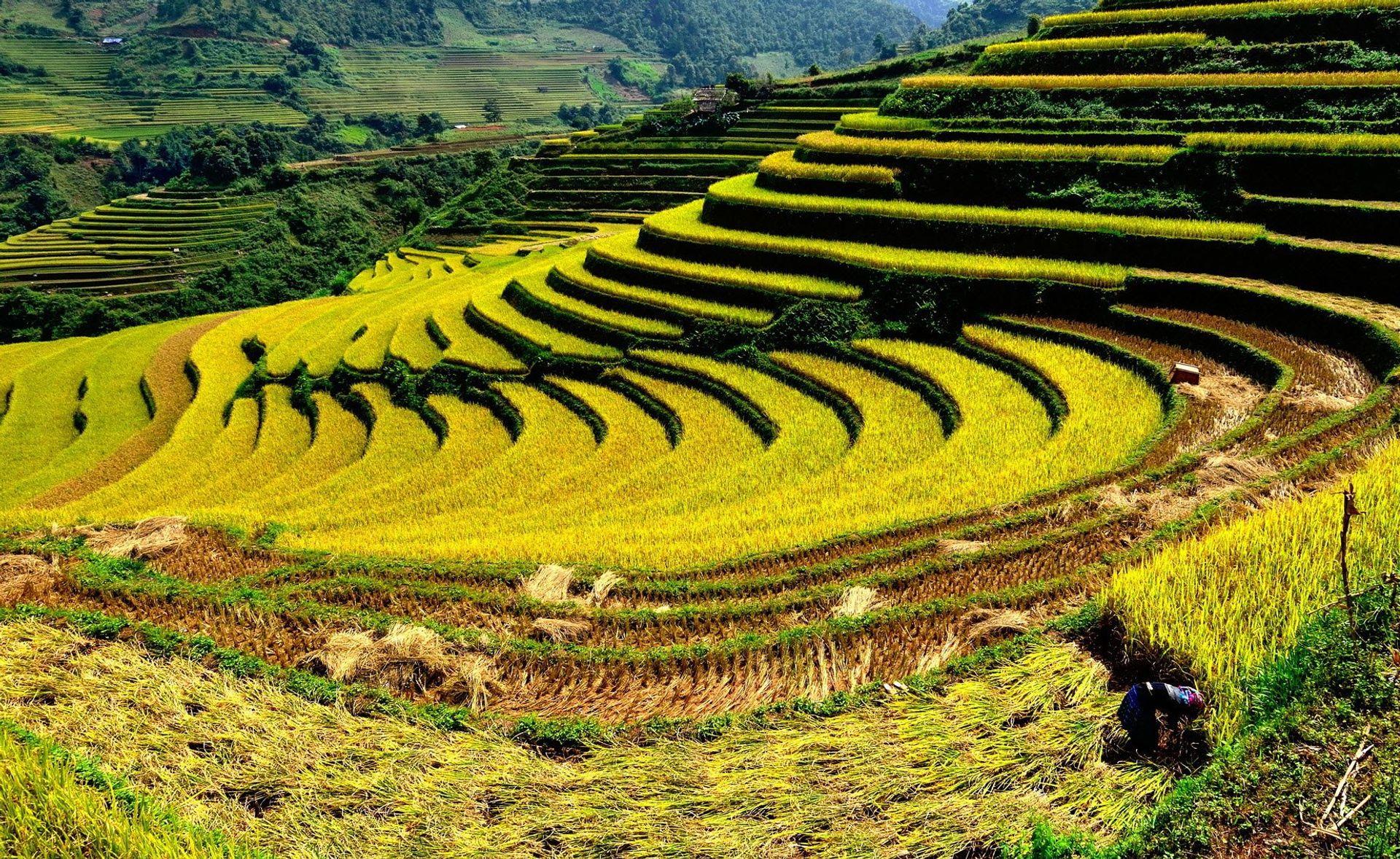 Lào Cai mang vẻ đẹp hoang sơ miền sơn cước