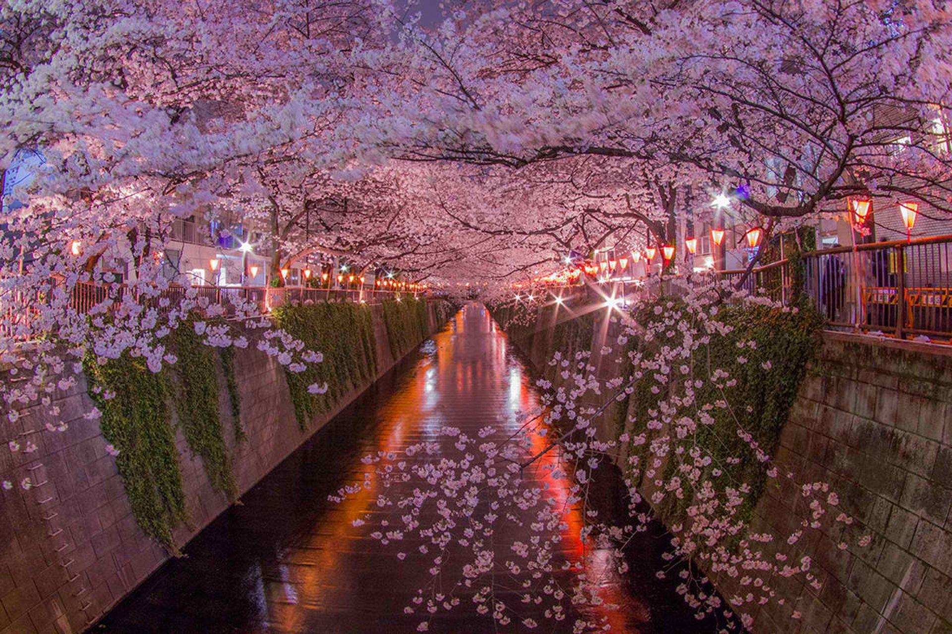 Sông Meguro