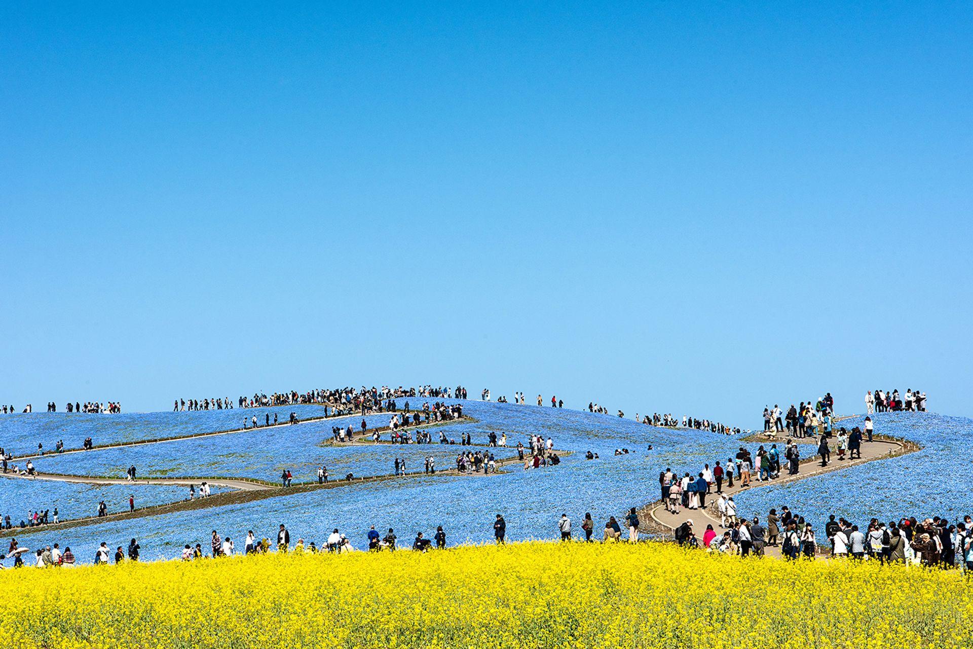 Công viên ven biển Hitachi