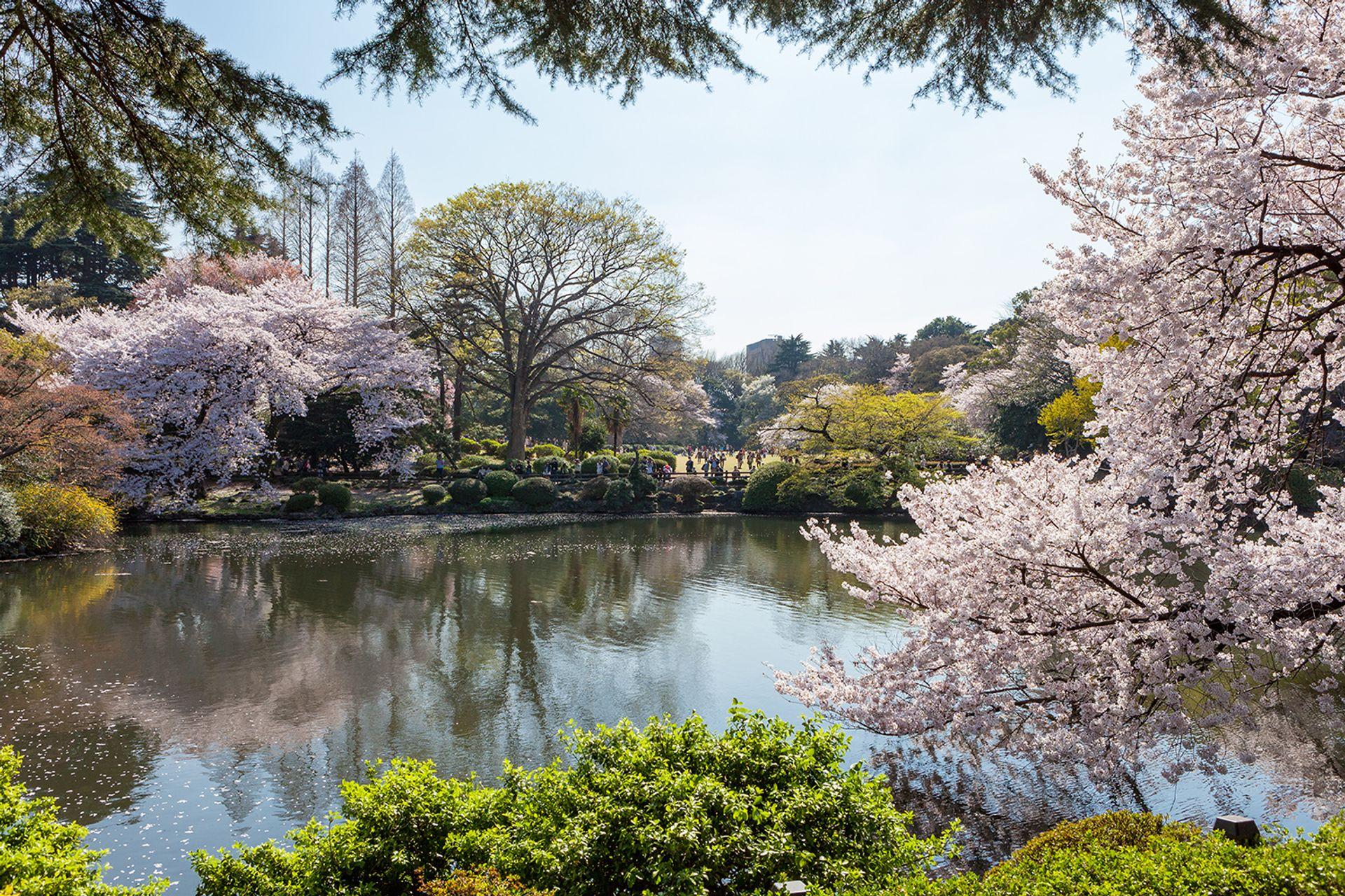 Vườn Quốc Gia Shinjuku Gyoen
