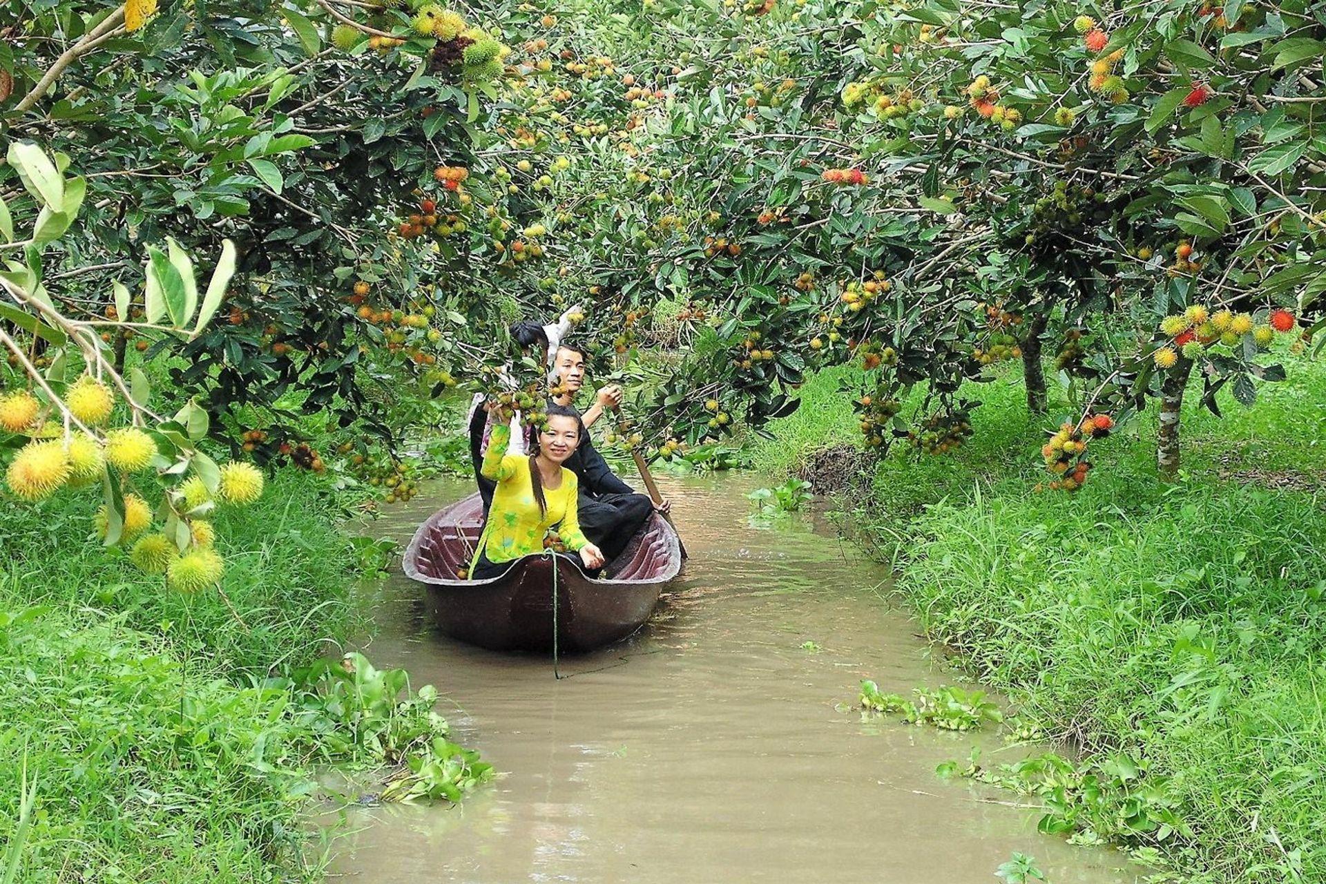 Mùa hè (khoảng tháng 6, 7, 8) ở Cần Thơ là mùa trái cây chín