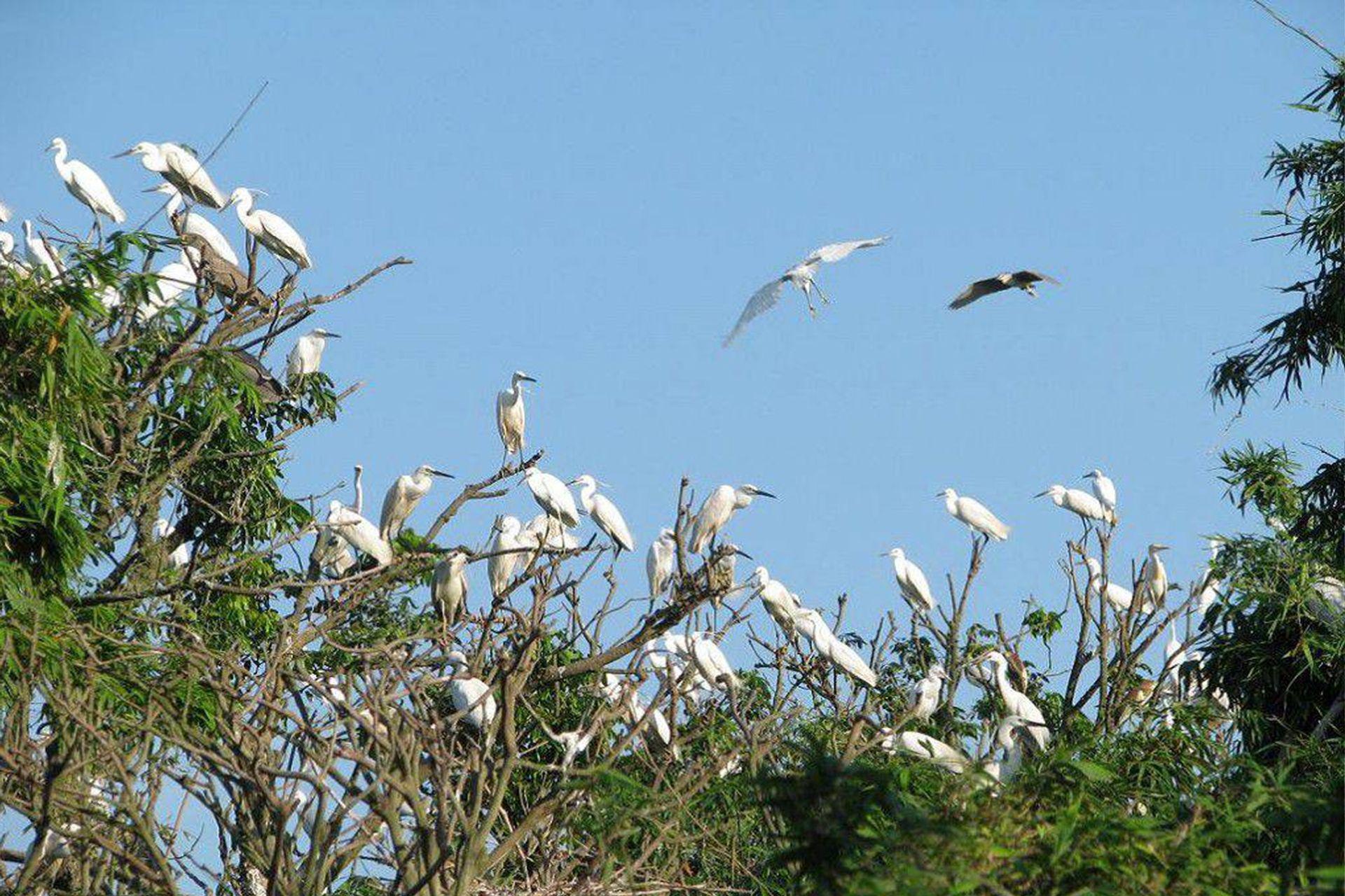 Cần Thơ là một trong những địa điểm đất lành chim đậu