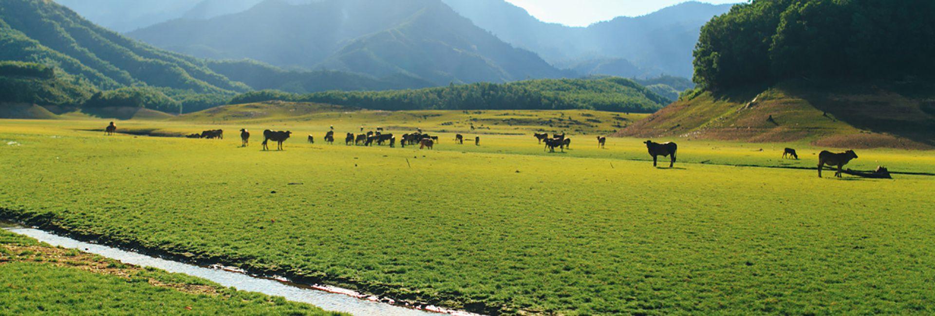 Hồ Hòa Trung - Điểm đến cuối tuần tại Đà Nẵng