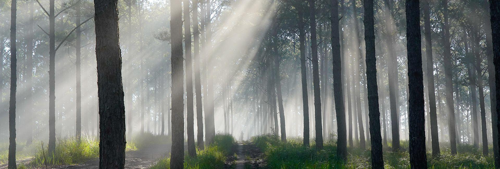 Check-in liền tay top 7 rừng thông Đà Lạt lên hình xinh lung linh