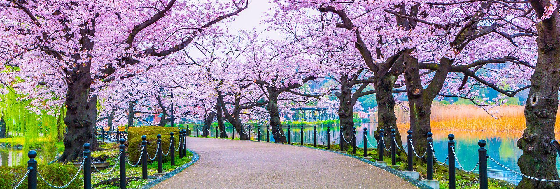 10 địa điểm ngắm hoa anh đào đẹp nhất ở Kyoto, Nhật Bản