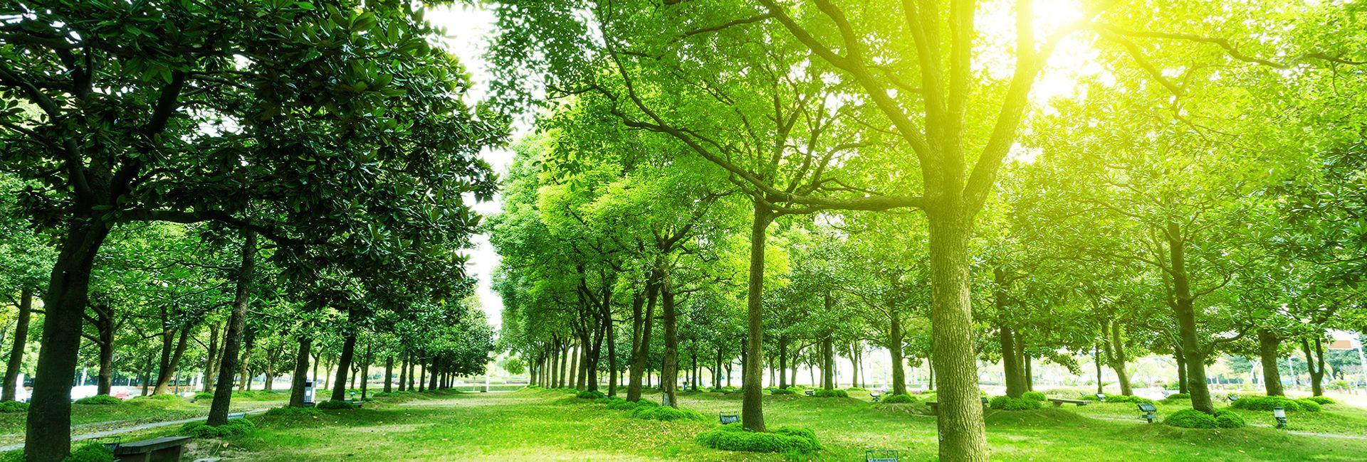 Top 5 công viên xinh đẹp nhất Busan, Hàn Quốc