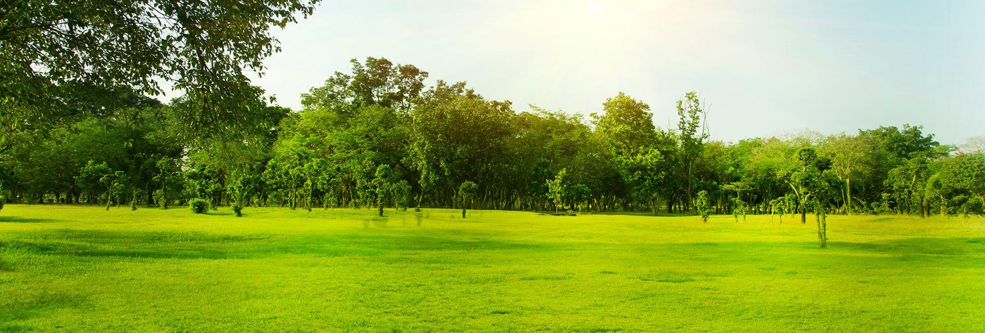 Hướng dẫn du lịch Thảo nguyên xanh Văn Thánh, Sài Gòn