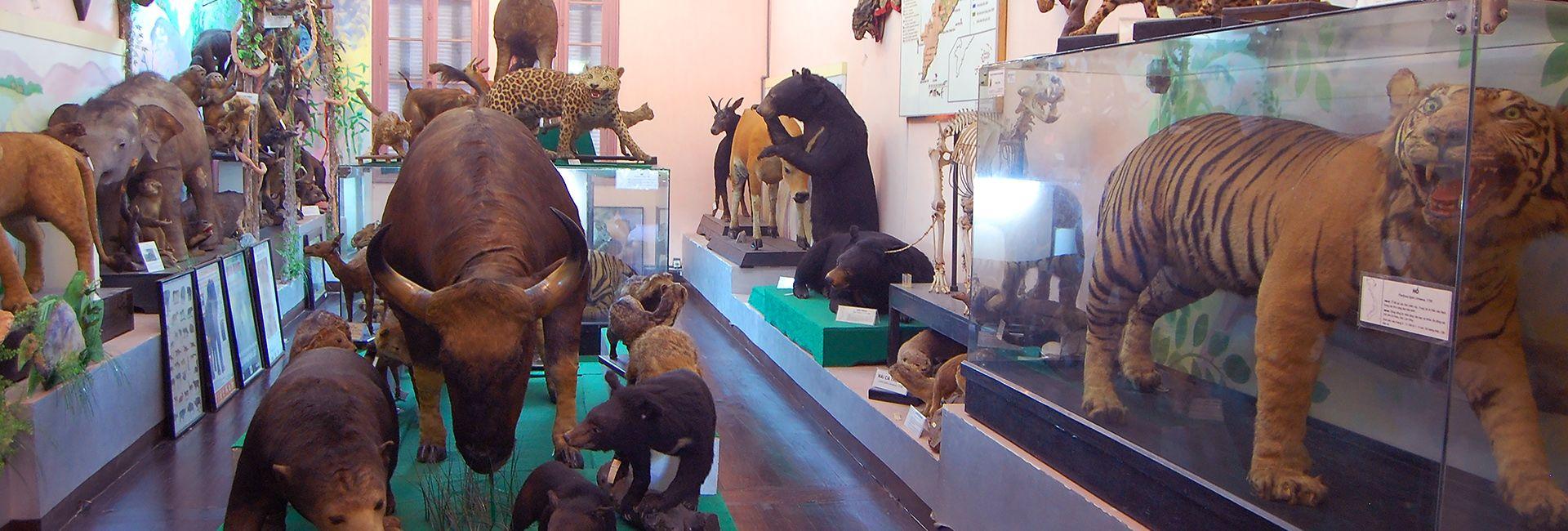 """""""Xả stress"""" cuối tuần tại Bảo tàng thiên nhiên Việt Nam"""