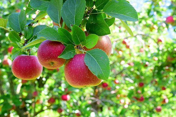 Khám phá 10 vườn trái cây gần Sài Gòn hấp dẫn nhất