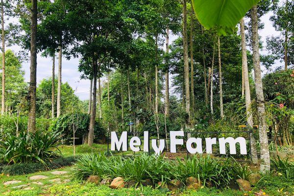 nha-san-thai-mely-farm-homestay-ba-vi-ha-noi