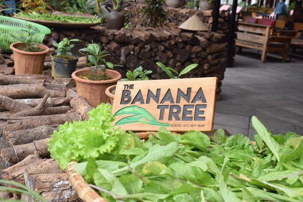 khuon vien the banana tree hostel kitchen bar ninh binh