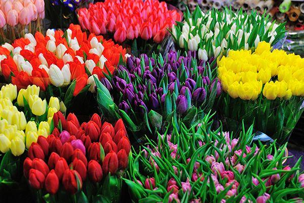 Hướng dẫn tham quan chợ hoa Hồ Thị Kỷ, Sài Gòn