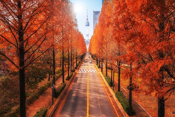 Nên đi du lịch Seoul vào thời điểm nào trong năm?