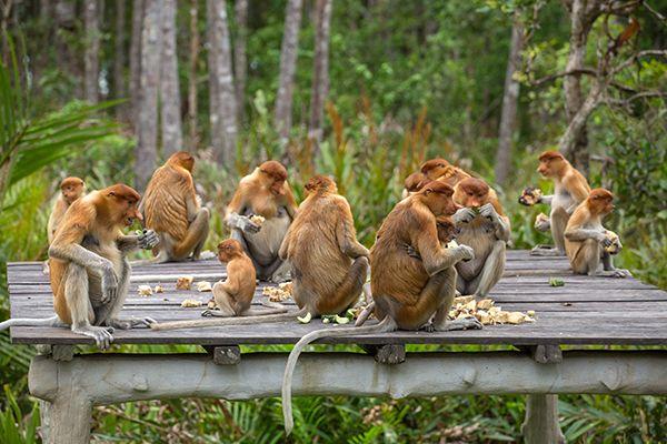 10 trải nghiệm tuyệt nhất nên thử ở Kuching, Malaysia