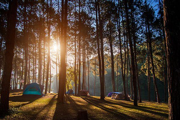 Sơn Tinh Camp - Điểm dã ngoại cuối tuần hấp dẫn